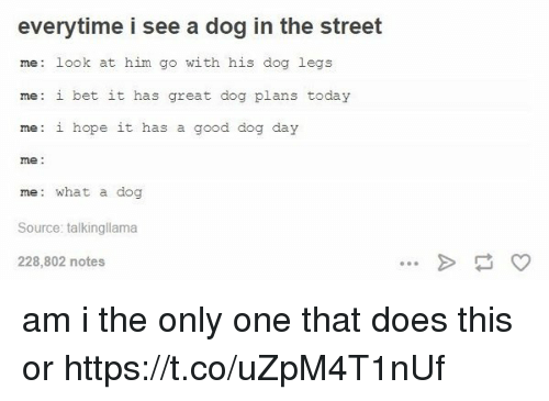 Dogs, I Bet, and Good: everytime i see a dog in the street  me look at him go with his dog legs  me: i bet it has great dog plans today  me: i hope it has  a good dog day  me  me: what a dog  Source: talkingllama  228,802 notes am i the only one that does this or https://t.co/uZpM4T1nUf