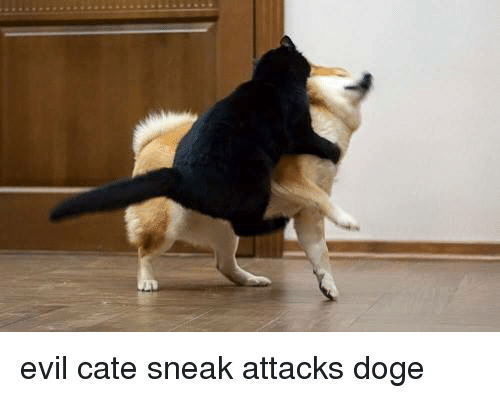 Doge, Evil, and Sneak: evil cate sneak attacks doge