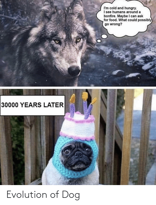 Evolution of Dog | Evolution Meme on ME.ME