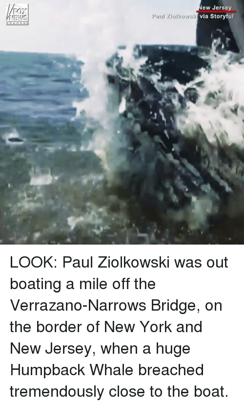 Memes, New York, and New Jersey: ew Jersey  via Storyful  FOI  Paul Ziolkowsk LOOK: Paul Ziolkowski was out boating a mile off the Verrazano-Narrows Bridge, on the border of New York and New Jersey, when a huge Humpback Whale breached tremendously close to the boat.