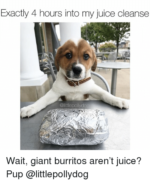 Juice, Memes, and Giant: Exactly 4 hours into my juice cleanse  @littlepollydog Wait, giant burritos aren't juice? Pup @littlepollydog