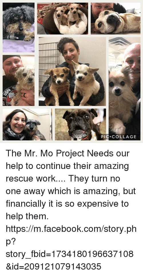 Facebook, Memes, and Work: EXPE  PIC COLLAGE The Mr. Mo Project Needs our help to continue their amazing rescue work.... They turn no one away which is amazing, but financially it is so expensive to help them.  https://m.facebook.com/story.php?story_fbid=1734180196637108&id=209121079143035