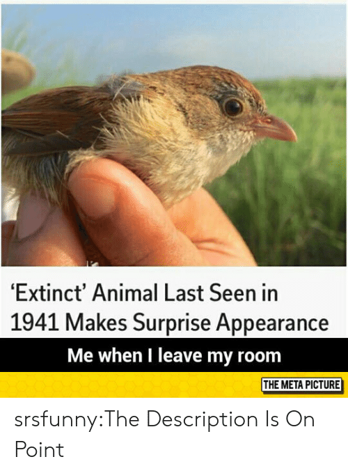 Tumblr, Animal, and Blog: 'Extinct' Animal Last Seen in  1941 Makes Surprise Appearance  Me when I leave my room  THE META PICTURE srsfunny:The Description Is On Point