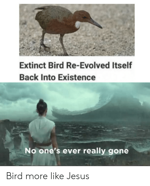Jesus, Dank Memes, and Back: Extinct Bird Re-Evolved Itself  Back Into Existence  No one's ever really gone Bird more like Jesus
