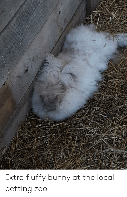 Extra Fluffy Bunny at the Local Petting Zoo | Zoo Meme on ME ME