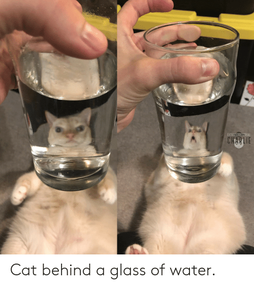 Charlie, Water, and Cat: EXTRATERRESTRIAL  CHARLIE Cat behind a glass of water.