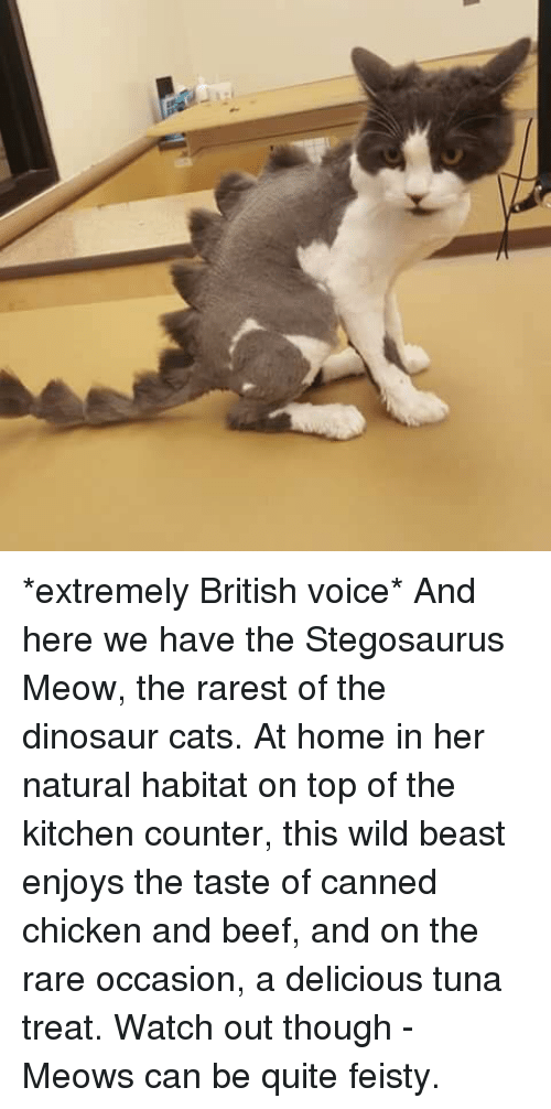extremely british voice and here we have the stegosaurus meow the