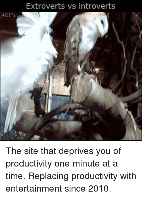 Time, Site, and Entertainment: Extroverts vs introverts  4GIFs  .c The site that deprives you of productivity one minute at a time. Replacing productivity with entertainment since 2010.