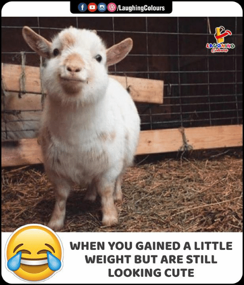 Cute, Indianpeoplefacebook, and Looking: f  LaughingColours  LAYGHING  WHEN YOU GAINED A LITTLE  WEIGHT BUT ARE STILL  LOOKING CUTE