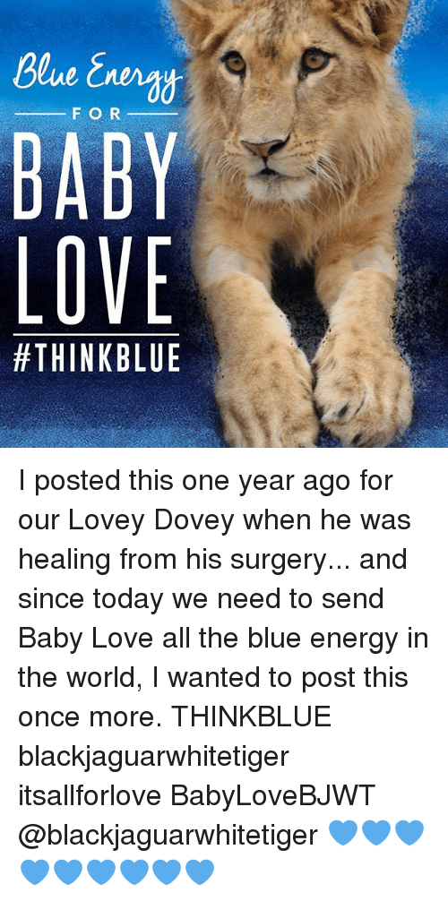 Energy, Love, and Memes: F O R  BABY  LOVE  I posted this one year ago for our Lovey Dovey when he was healing from his surgery... and since today we need to send Baby Love all the blue energy in the world, I wanted to post this once more. THINKBLUE blackjaguarwhitetiger itsallforlove BabyLoveBJWT @blackjaguarwhitetiger 💙💙💙💙💙💙💙💙💙
