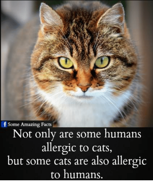 f some amazing facts not only are some humans allergic 18762013 f some amazing facts not only are some humans allergic to cats but