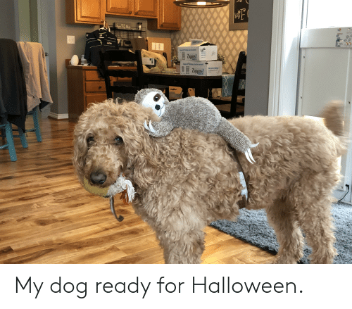 Halloween, Dog, and Zappos: F  the  Zapors  the cof  Zappos My dog ready for Halloween.
