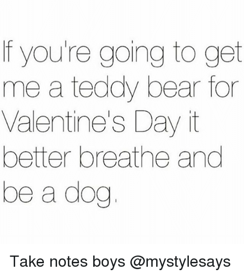 Valentine's Day, Bear, and Girl Memes: f you're going to get  me a teddy bear for  Valentine's Day it  better breathe and  be a dog Take notes boys @mystylesays