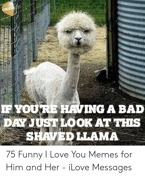 Bad, Bad Day, and Funny: F YOURE HAVING A BAD  DAY JUST LOOK AT THIs  SHAVEDLLAMA 75 Funny I Love You Memes for Him and Her - iLove Messages