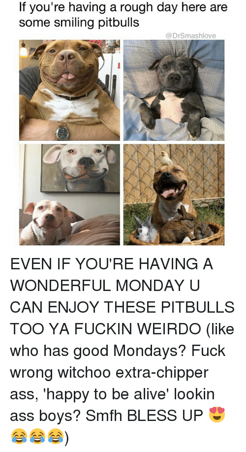 Alive, Ass, and Bless Up: f you're having a rough day here are  some smiling pitbulls  @DrSmashlove EVEN IF YOU'RE HAVING A WONDERFUL MONDAY U CAN ENJOY THESE PITBULLS TOO YA FUCKIN WEIRDO (like who has good Mondays? Fuck wrong witchoo extra-chipper ass, 'happy to be alive' lookin ass boys? Smfh BLESS UP 😍😂😂😂)