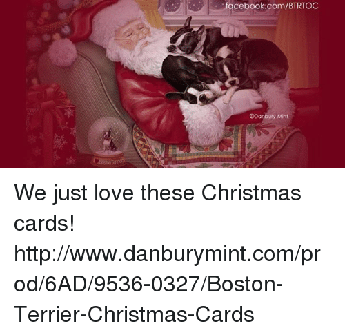 memes boston and boston terrier facebookcombtrtoc odanbury mint we - Mint Christmas Cards