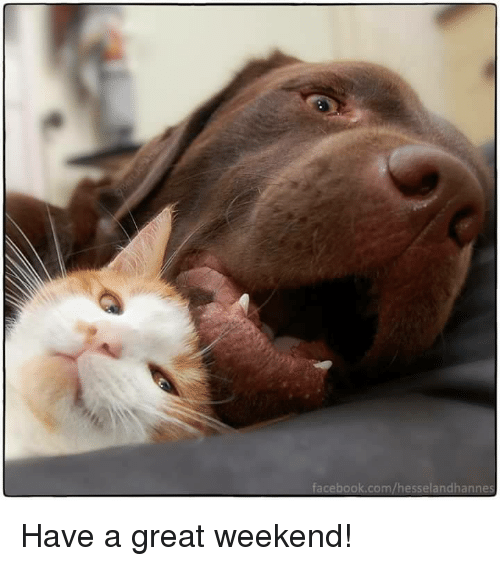 Image result for have a great weekend cat images