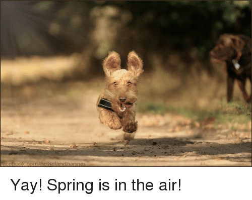 Funny Meme Yay : Facebookcomhesselandhannes yay! spring is in the air! meme on me.me