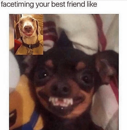 Best Friend, Memes, and Best: facetiming your best friend like