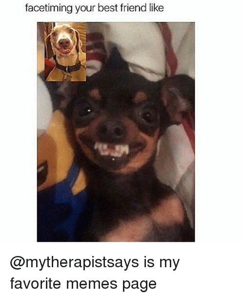 Best Friend, Friends, and Funny: facetiming your best friend like @mytherapistsays is my favorite memes page