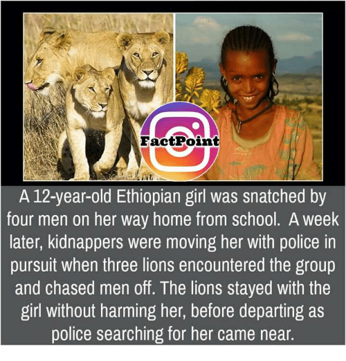 fact point a 12 year old ethiopian girl was snatched by four 9348394 ✅ 25 best memes about ethiopian ethiopian memes