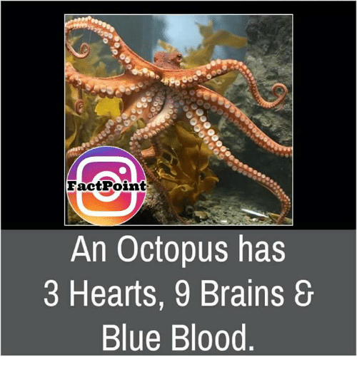 Bloods Brainemes Fact Point An Octopus Has 3 Hearts 9