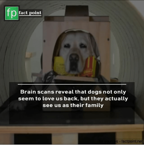 Dogs, Family, and Love: fact point  Brain scans reveal that dogs not only  seem to love us back, but they actually  see us as their family  s factpoint.net