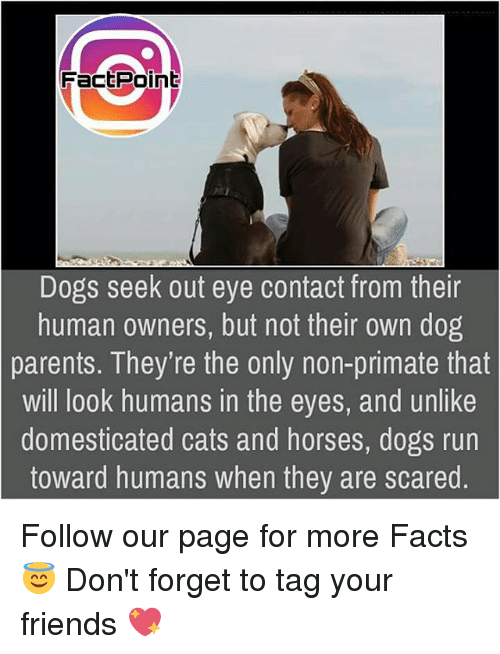 Dogs Seek Out Eye Contact