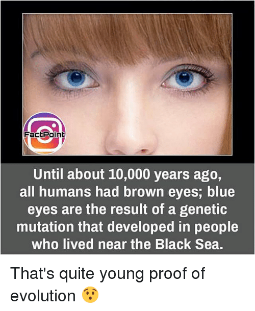 Memes, Black, and Blue: Fact Point  Until about 10,000 years ago,  all humans had brown eyes, blue  eyes are the result of a genetic  mutation that developed in people  who lived near the Black Sea. That's quite young proof of evolution 😯
