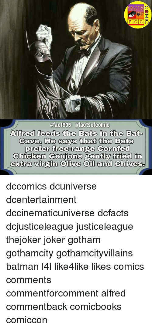 Batman, Joker, and Memes:  #fact905 afactsofcomic  Alfred feeds the Bats in the Bat  Cave. He says that the Bats  prefer free-range Cornfed  Chicken Goujons gently fried in  extra virgin olive Oil and Chives. dccomics dcuniverse dcentertainment dccinematicuniverse dcfacts dcjusticeleague justiceleague thejoker joker gotham gothamcity gothamcityvillains batman l4l like4like likes comics comments commentforcomment alfred commentback comicbooks comiccon