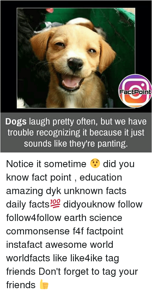 Dogs, Facts, and Friends: FactPoint  Dogs laugh pretty often, but we have  trouble recognizing it because it just  sounds like they re panting Notice it sometime 😯 did you know fact point , education amazing dyk unknown facts daily facts💯 didyouknow follow follow4follow earth science commonsense f4f factpoint instafact awesome world worldfacts like like4ike tag friends Don't forget to tag your friends 👍