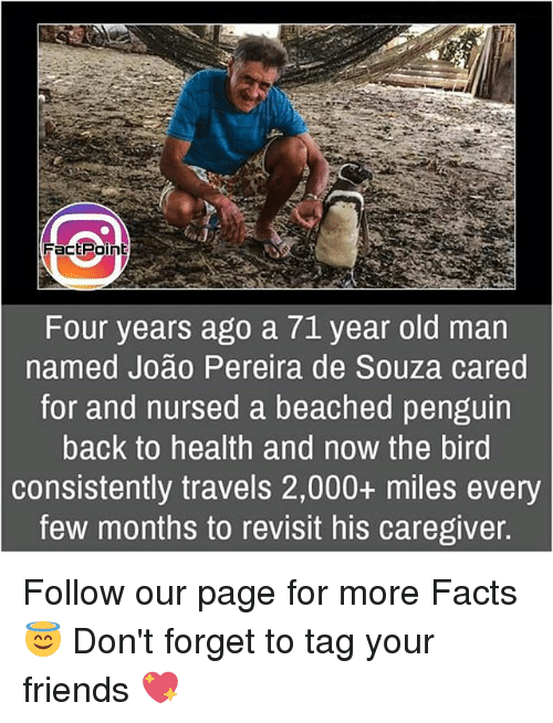 Facts, Friends, and Memes: FactPoint  Four years ago a 71 year old man  named Joao Pereira de Souza cared  for and nursed a beached penguin  back to health and now the bird  consistently travels 2,000+ miles every  few months to revisit his caregiver Follow our page for more Facts 😇 Don't forget to tag your friends 💖