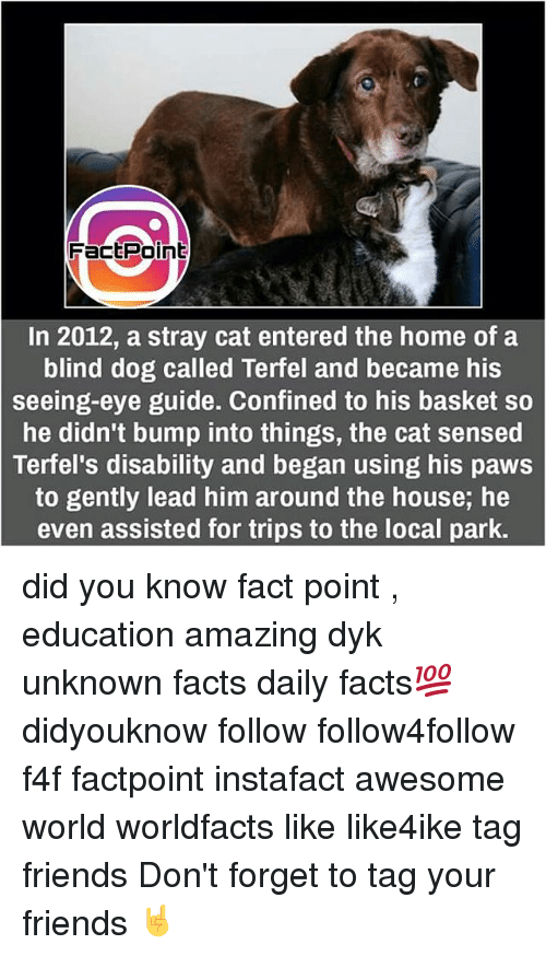 Memes, 🤖, and Stray Cats: FactPoint  In 2012, a stray cat entered the home of a  blind dog called Terfel and became his  seeing-eye guide. Confined to his basket so  he didn't bump into things, the cat sensed  Terfel's disability and began using his paws  to gently lead him around the house, he  even assisted for trips to the local park. did you know fact point , education amazing dyk unknown facts daily facts💯 didyouknow follow follow4follow f4f factpoint instafact awesome world worldfacts like like4ike tag friends Don't forget to tag your friends 🤘