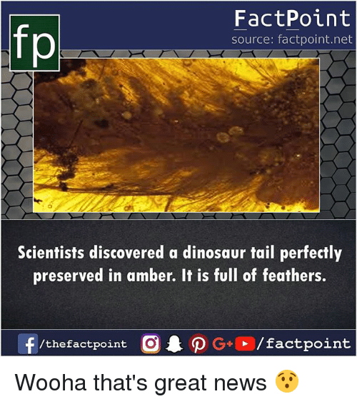 Dinosaur, Memes, and News: FactPoint  source: factpoint.net  Scientists discovered a dinosaur tail perfectly  preserved in amber. It is full of feathers. Wooha that's great news 😯