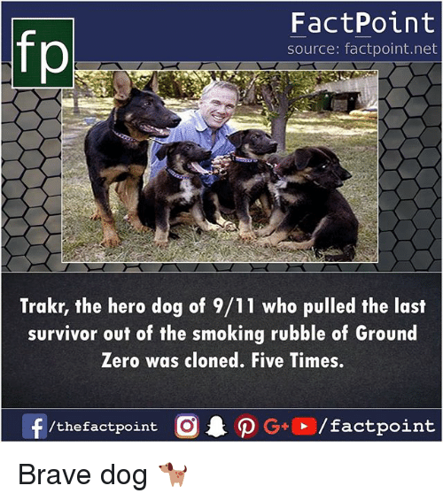 9/11, Memes, and Smoking: FactPoint  source: factpoint.net  Trakr, the hero dog of 9/11 who pulled the last  survivor out of the smoking rubble of Ground  Zero was cloned. Five Times.  f/thefactpoint O G/factpoint Brave dog 🐕