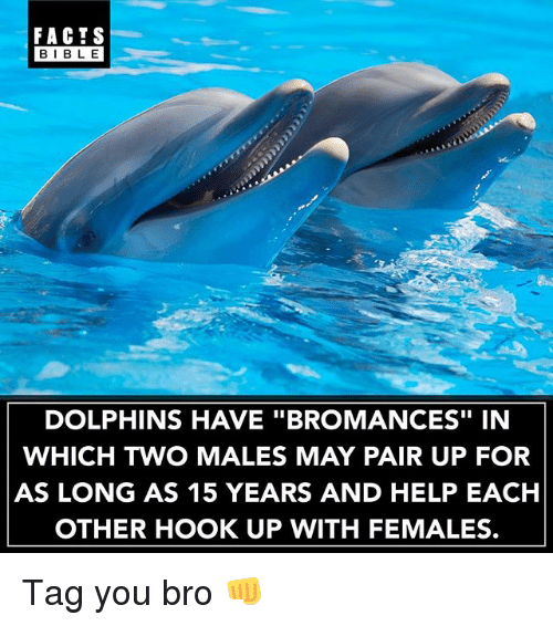 """Facts, Memes, and Bible: FACTS  BIBLE  BIBL E  DOLPHINS HAVE """"BROMANCES"""" IN  WHICH TWO MALES MAY PAIR UP FOR  AS LONG AS 15 YEARS AND HELP EACH  OTHER HOOK UP WITH FEMALES. Tag you bro 👊"""