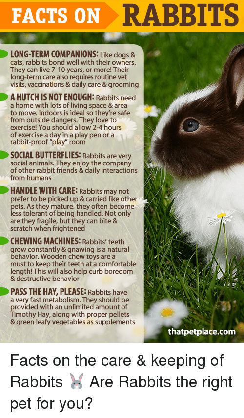 FACTS ON RABBITS LONG TERM COMPANIONS Like Dogs & Cats