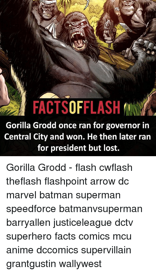 Anime, Batman, and Facts: FACTSOFFLASH  Gorilla Grodd once ran for governor in  Central City and won. He then later ran  for president but lost. Gorilla Grodd - flash cwflash theflash flashpoint arrow dc marvel batman superman speedforce batmanvsuperman barryallen justiceleague dctv superhero facts comics mcu anime dccomics supervillain grantgustin wallywest