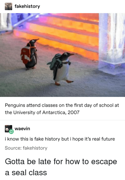 Fake, Future, and School: fakehistory  Penguins attend classes on the first day of school at  the University of Antarctica, 2007  waevin  i know this is fake history but i hope it's real future  Source: fakehistory Gotta be late for how to escape a seal class