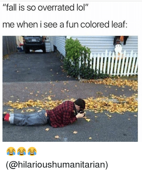 "Fall, Lol, and Memes: ""fall is so overrated lol""  me when i see a fun colored leaf: 😂😂😂 (@hilarioushumanitarian)"