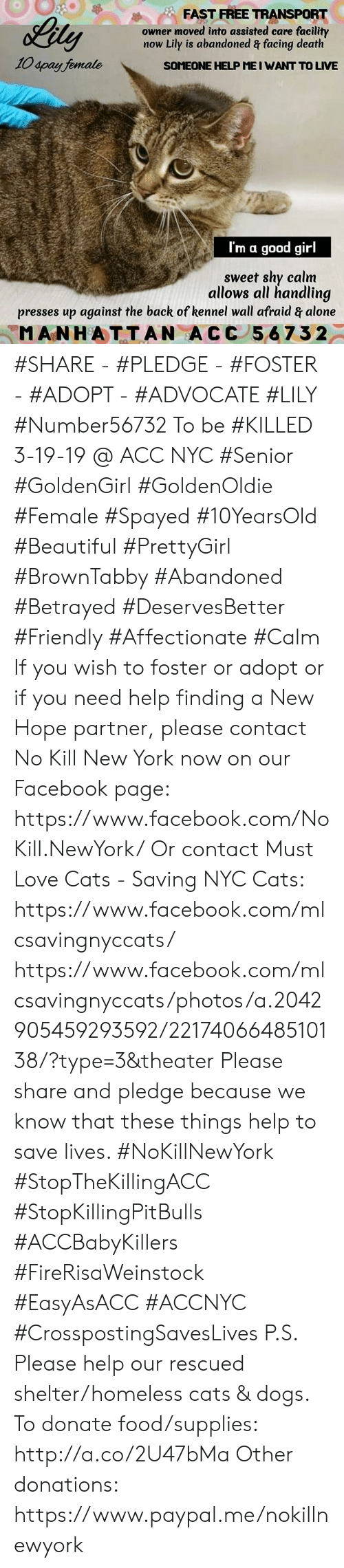 Being Alone, Beautiful, and Cats: FAST FREE TRANSPORT  owner moved into assisted care facility  now Lily is abandoned & facing death  10 4pay female  SOMEONE HELP ME I WANT TO LIVE  I'm  good girl  sweet shy calm  allows all handling  presses up against the back of kennel wall afraid & alone  MANHATTAN A CC 567 32 #SHARE - #PLEDGE - #FOSTER - #ADOPT - #ADVOCATE  #LILY #Number56732 To be #KILLED 3-19-19 @ ACC NYC  #Senior #GoldenGirl #GoldenOldie #Female #Spayed #10YearsOld #Beautiful #PrettyGirl #BrownTabby #Abandoned #Betrayed #DeservesBetter #Friendly #Affectionate  #Calm   If you wish to foster or adopt or if you need help finding a New Hope partner, please contact No Kill New York now on our Facebook page:  https://www.facebook.com/NoKill.NewYork/  Or contact Must Love Cats - Saving NYC Cats:  https://www.facebook.com/mlcsavingnyccats/  https://www.facebook.com/mlcsavingnyccats/photos/a.2042905459293592/2217406648510138/?type=3&theater  Please share and pledge because we know that these things help to save lives. #NoKillNewYork #StopTheKillingACC #StopKillingPitBulls #ACCBabyKillers #FireRisaWeinstock #EasyAsACC #ACCNYC #CrosspostingSavesLives  P.S. Please help our rescued shelter/homeless cats & dogs.  To donate food/supplies: http://a.co/2U47bMa  Other donations: https://www.paypal.me/nokillnewyork