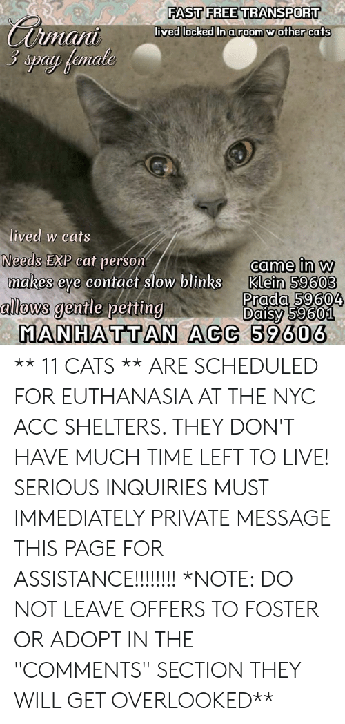 """Cats, Memes, and Live: FASTFREE TRANSPORT  lived locked  In a room wother cats  man  3 spay female  lived w cats  Needs EXP cat person  makes eye contaét slow blinks  came in w  Klein 59603  Prada 59604  allows  gentle petting  Daisy 59601  MANHATTAN ACC 59606 ** 11  CATS  ** ARE SCHEDULED FOR EUTHANASIA AT THE NYC ACC SHELTERS.  THEY DON'T HAVE MUCH TIME LEFT TO LIVE!  SERIOUS INQUIRIES MUST IMMEDIATELY PRIVATE MESSAGE THIS PAGE FOR ASSISTANCE!!!!!!!! *NOTE: DO NOT LEAVE OFFERS TO FOSTER OR ADOPT IN THE """"COMMENTS"""" SECTION THEY WILL GET OVERLOOKED**"""