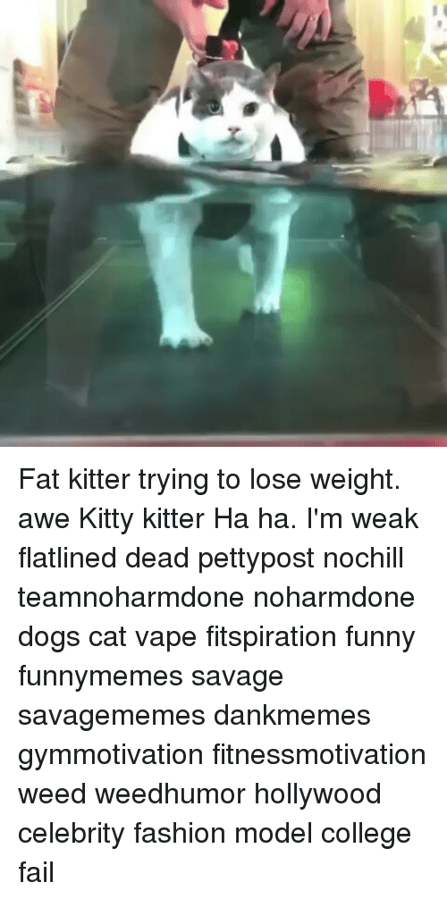 Memes, 🤖, and Weeds: Fat kitter trying to lose weight. awe Kitty kitter Ha ha. I'm weak flatlined dead pettypost nochill teamnoharmdone noharmdone dogs cat vape fitspiration funny funnymemes savage savagememes dankmemes gymmotivation fitnessmotivation weed weedhumor hollywood celebrity fashion model college fail