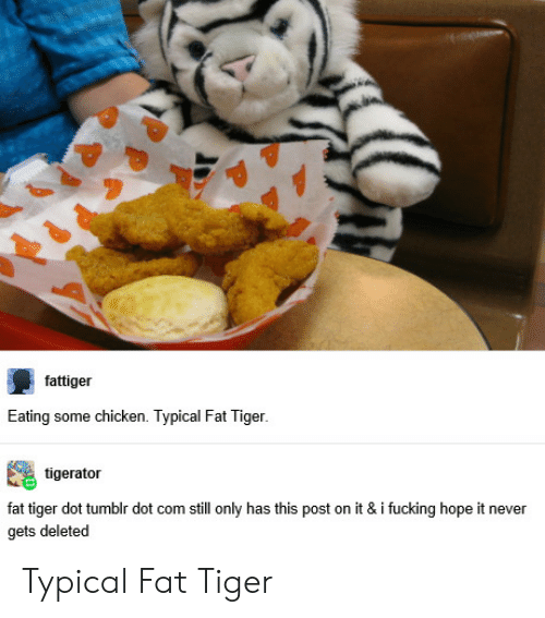 Fucking, Tumblr, and Chicken: fattiger  Eating some chicken. Typical Fat Tiger.  tigerator  fat tiger dot tumblr dot com still only has this post on it & i fucking hope it never  gets deleted Typical Fat Tiger