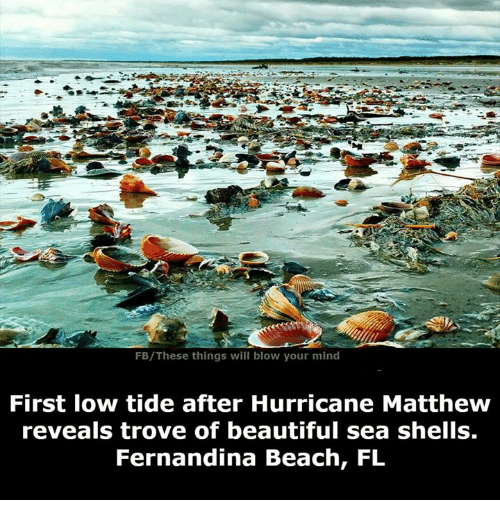 fb these things will blow your mind first low tide after 5144727 ✅ 25 best memes about hurricane matthew hurricane matthew memes