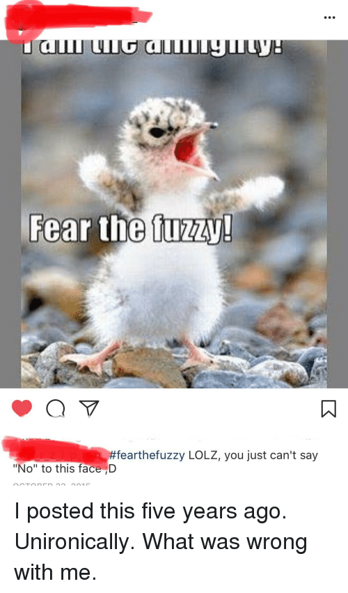 Fear The Tuzz Fearthefuzzy Lolz You Just Cant Say No To This Face