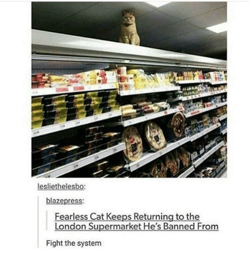 Fearless Cat Keeps Returning To The London Supermarket Hes Banned - Fearless cat keeps returning to the london supermarket hes banned from