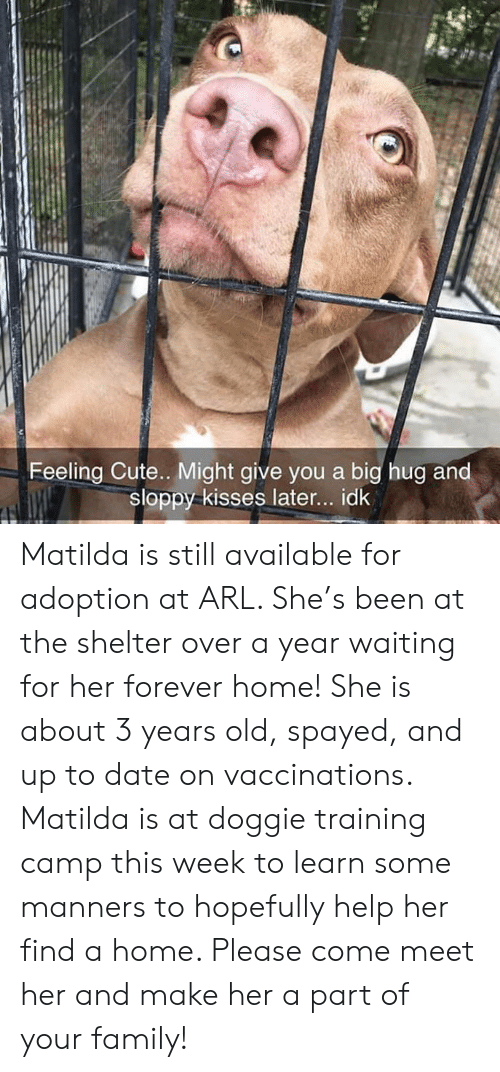 Cute, Family, and Matilda: Feeling Cute.. Might give you a big hug and  sloppy kisses later... idk Matilda is still available for adoption at ARL. She's been at the shelter over a year waiting for her forever home! She is about 3 years old, spayed, and up to date on vaccinations. Matilda is at doggie training camp this week to learn some manners to hopefully help her find a home. Please come meet her and make her a part of your family!