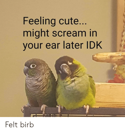 Cute, Scream, and Feeling: Feeling cute  might scream in  your ear later IDK Felt birb
