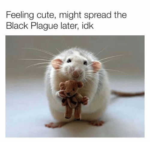 Cute, Dank, and Black: Feeling cute, might spread the  Black Plague later, idk